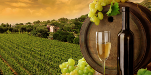 city and wine tours